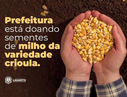 Prefeitura de Lagarto está doando sementes de milho da variedade crioula
