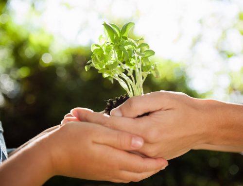 Agricultura e sustentabilidade: Prefeitura de Lagarto está doando mudas de 13 espécies diferentes