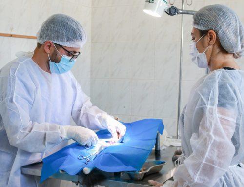 Prefeitura de Lagarto realiza mais um mutirão de castração no Zoonoses